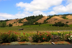 Anderson Valley Wine Tasting